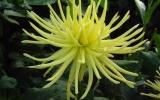 Gryson_s_Yellow_Speeder.jpg